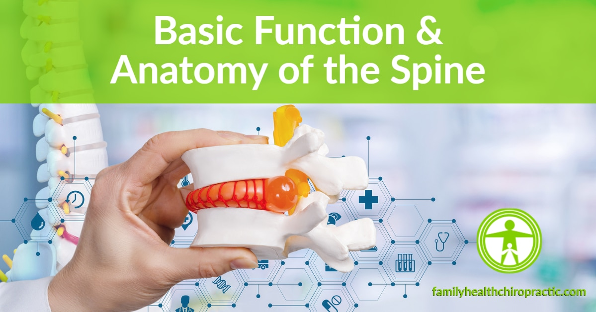 Basic Function and Anatomy of the Human Spine