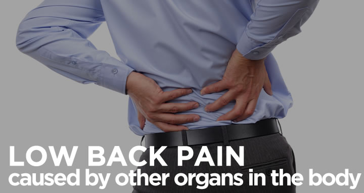 low back pain caused by other organs