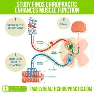 muscle brain function