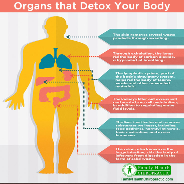 Organs That Detox Your Body Austin Chiropractor Family Health